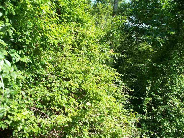 10 Ac +/- Stump Hollow Rd Spring City TN 37381 in    MLS 902468 - GreatLifeRE.com Photo 1