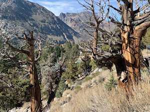 17 Oregon June Lake, CA 93529